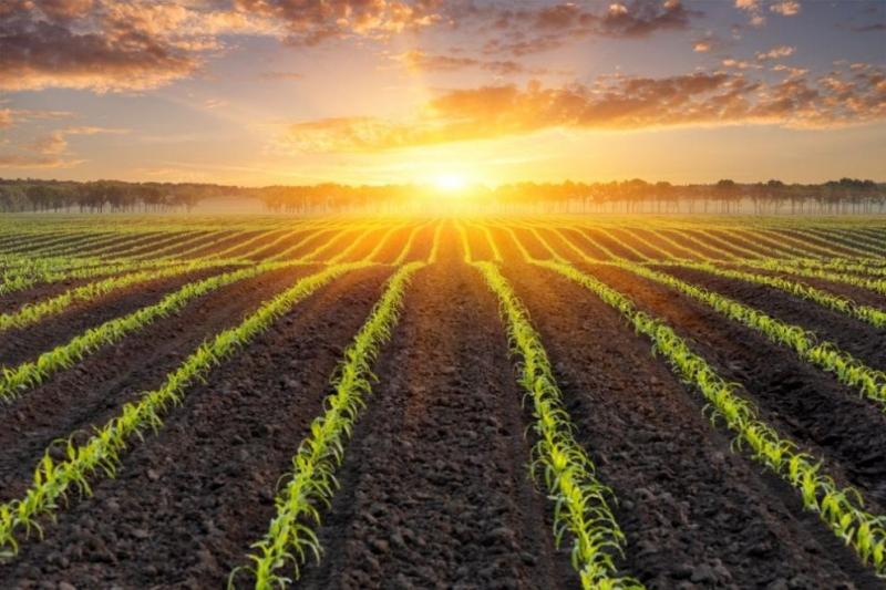 """Инспекцията по труда засилва допълнително контрола в сектор """"Селско стопанство""""предвид"""