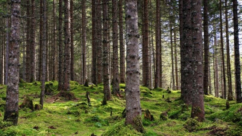 България заема 30 място по екологична ефективност, заедно с Коста