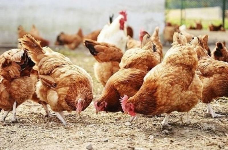 """Държавен фонд """"Земеделие"""" напомня, чеднес изтича срокът за прием на"""