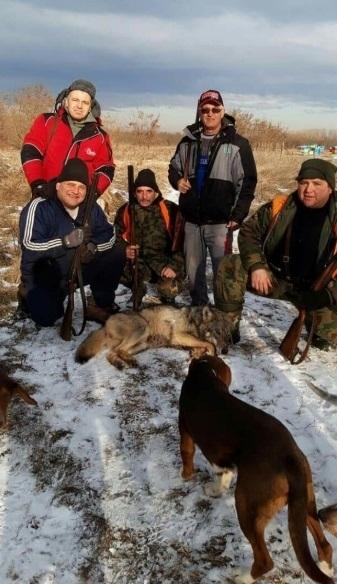 Ловци разбиха глутница вълци в Монтанско, убиха два от тях