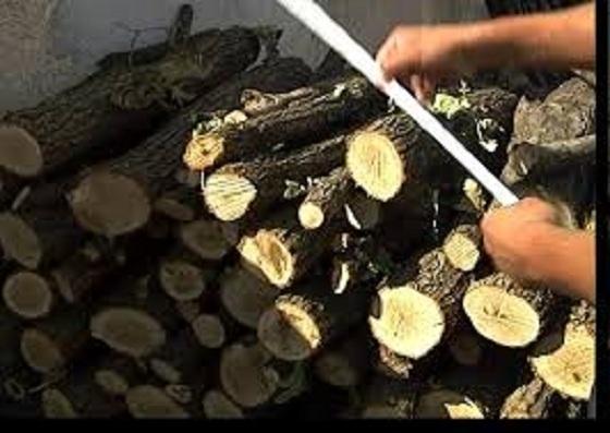 Трима непълнолетни са задигнали дърва за огрев от къщата на