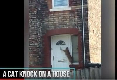 Британски автомобилист случайно засне най-възпитаната котка в света, която почуква
