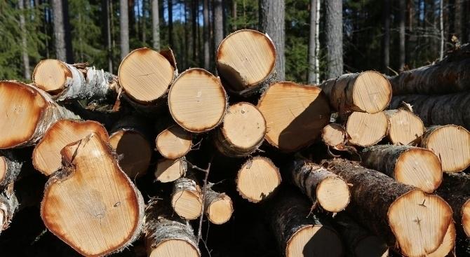 Снимка: Хванаха младеж от Лом с незаконни дърва в монтанско село