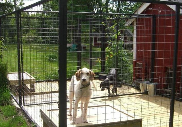 Врачанска фирма ще реконструира общинския изолатор за бездомни кучета в