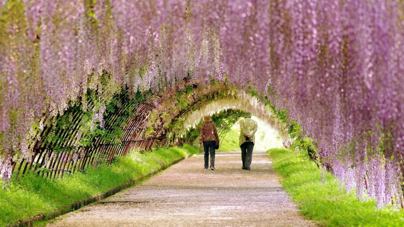 Дори само 10-минутна енергична разходка седмично може да намали риска