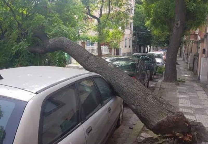 Дърво затисна кола в центъра на Пловдив, съобщи Дарик. Дървото