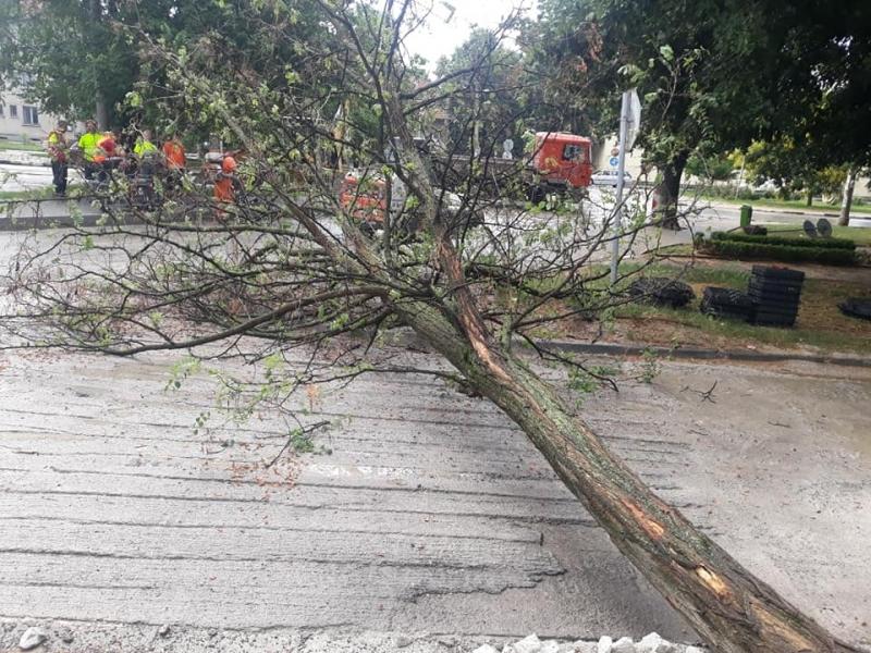 Дърво е паднало в близост до училище в центъра на
