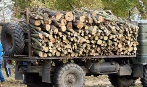 Задържаха четирима мъже, секли незаконно дърва във Видинско