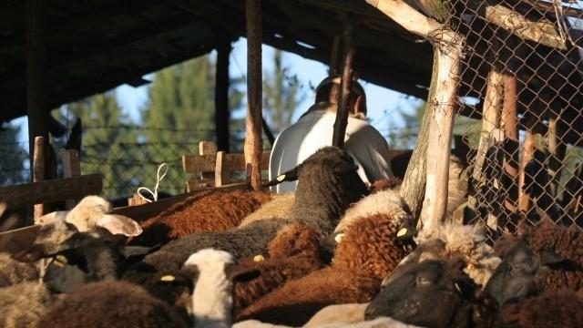Обор се срути и уби домашни животни в Монтанско, съобщиха
