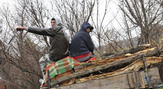 Задържаха бракониери, натоварили три каруци с незаконни дърва във Врачанско