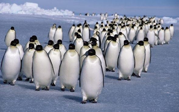 Броят на пингвините в някои части на Антарктида е намалял