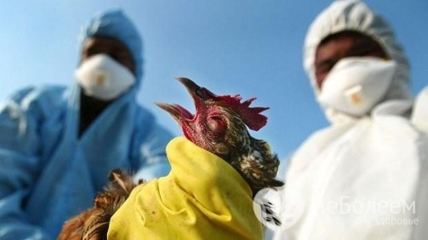 Първи случаи наптичи грипбяха потвърдени вАлбания, съобщи министерството на земеделието