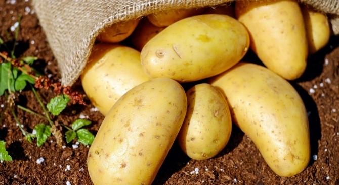 Старите картофи се продават два и половина пъти по-скъпо в