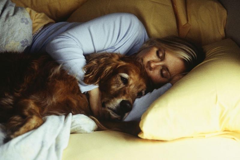 Стопанките на кучета иматпо-здрав сън, когато ги допускат да спят