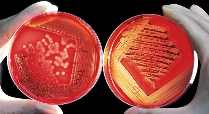 Около 70 процента от микробите на Земята живеят в нейните
