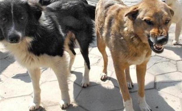 Група кучета нападнали и нахапали немска овчарка в двор в