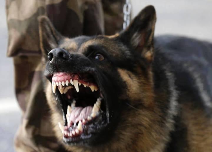 53-годишен мъж бе нападнат от куче в стопанския двор на