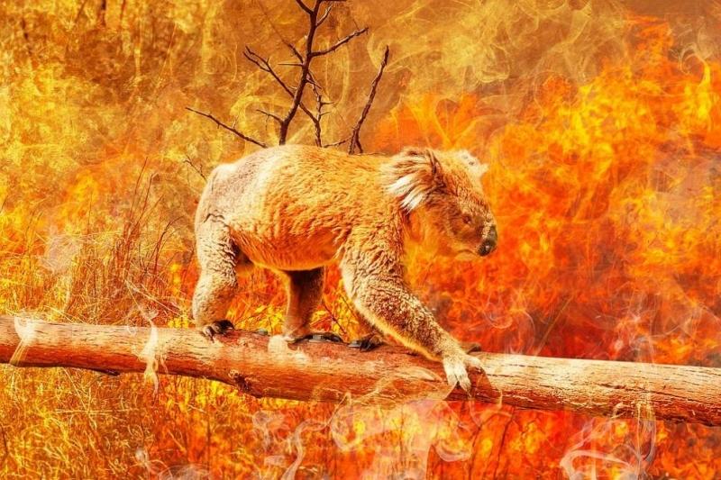 Пожарите в Австралия може да увеличат броя на застрашените животни