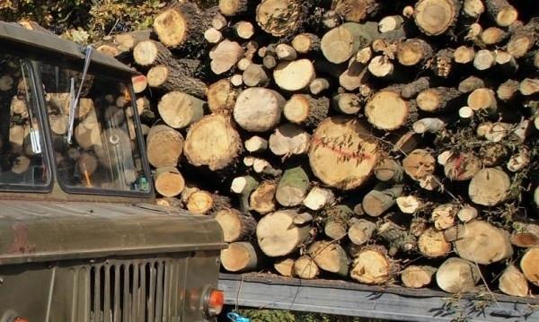 Полицаи иззеха 4 кубика незаконни дърва от имота на младеж