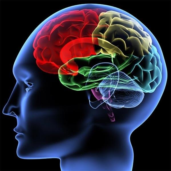 Човешкият мозък може да предсказва бъдещето