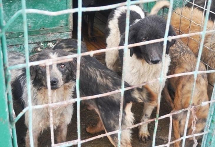 Жители на врачанското село Сираково се обявиха против незаконен по