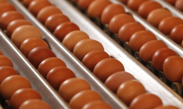 Цената на яйцата с 5-годишен рекорд: 50 ст. за бройка!