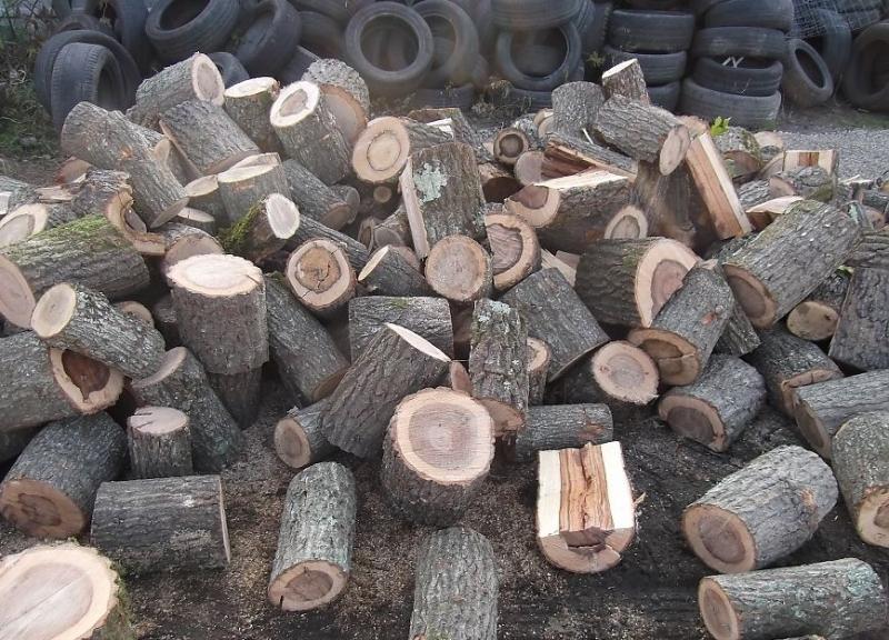 Полицията е открила незаконни дърва в два имота във врачанското