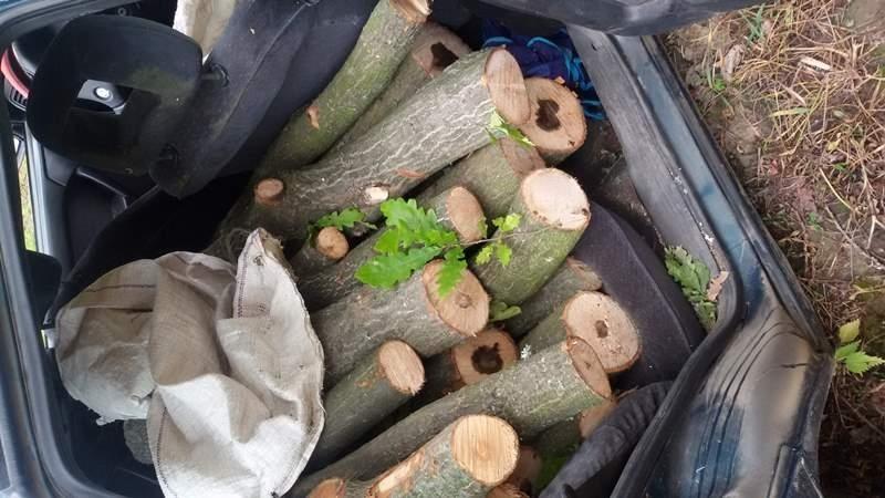 Служители на реда са хванали бракониер на дърва от монтанското