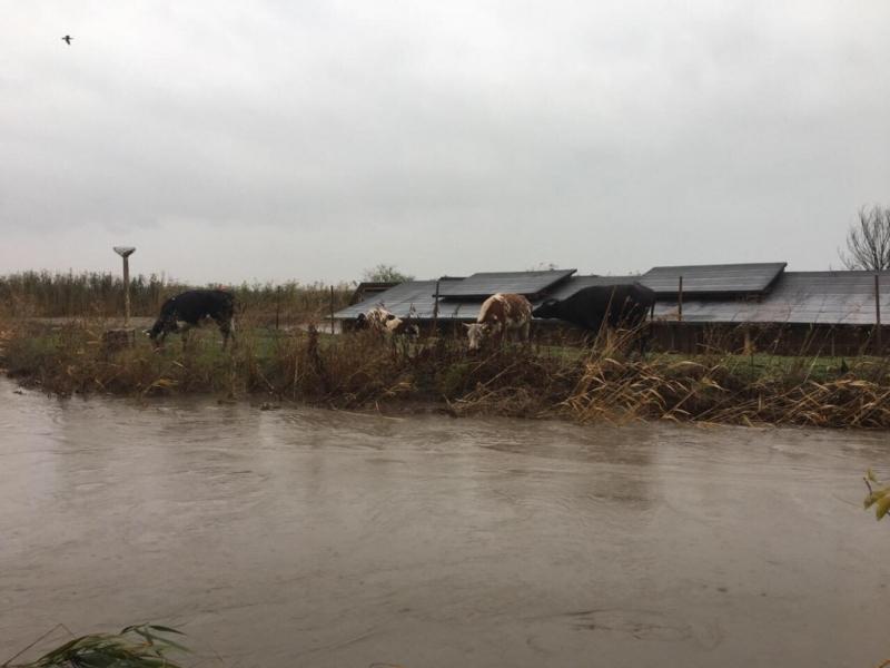 Мащабна спасителна операция в помощ на бедстващи животни е проведена