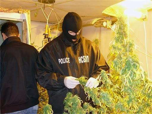 Служители на реда са разбили наркооранжерия край врачанското село Голямо