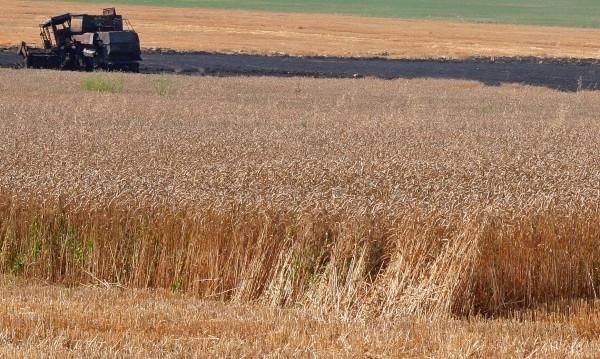 Земеделските производители в Монтанско имат добри добиви от пшеницата и