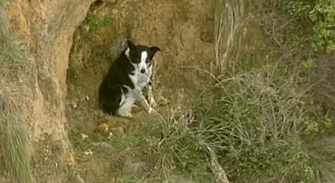 Три часа спасители в Австралия помагаха на заседнало на скала