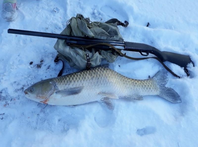 Ловец гръмна 15-килограмов амур в Дунав