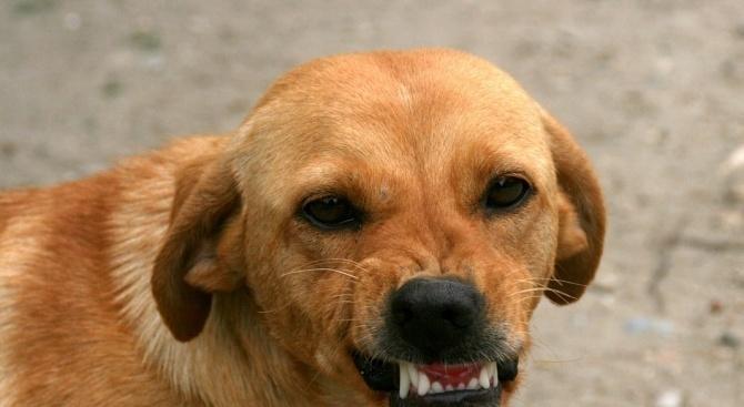 Снимка: Куче нахапа 12-годишно момче в Кърджалийско, издирват собственика