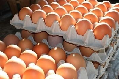 Наложена е възбрана върху произведените яйца в птицефермата в добричкото