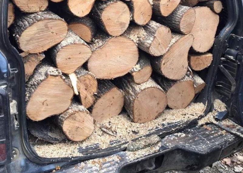Полицията е иззела незаконни дърва от имотите на жена в