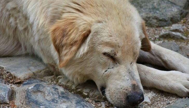 Жестокост! Пребиха до смърт кучето на баба в Монтанско