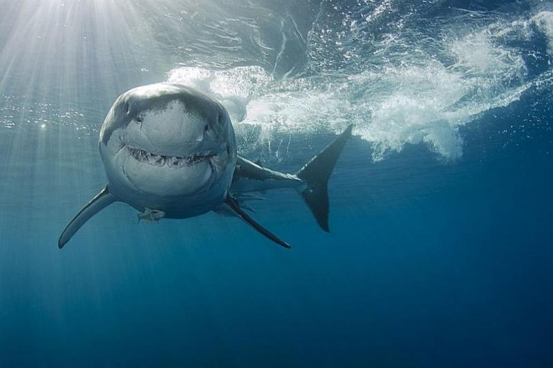 17-годишно момче загина днес в Австралия при нападение от акула,