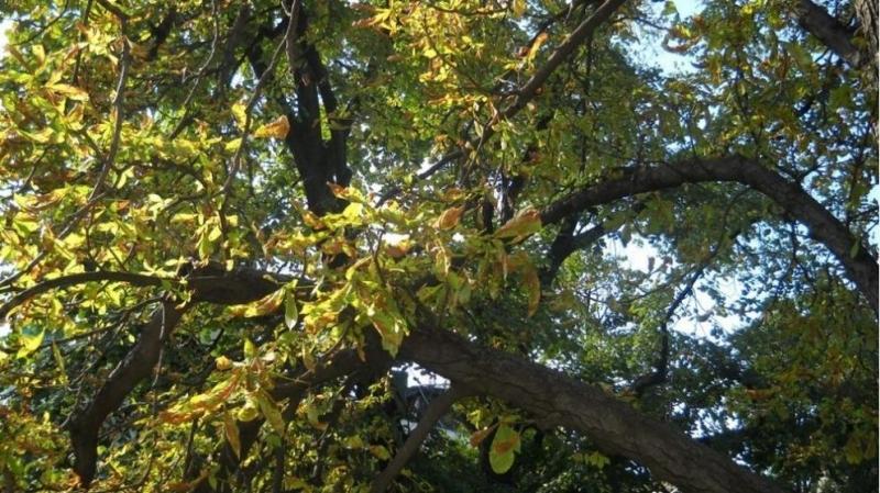 Паднало дърво в центъра на Пловдив по чудо не уби хора