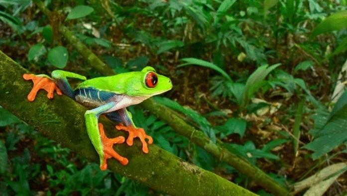 В тропическата гора Москития в Хондурас беше открита процъфтяваща екосистема