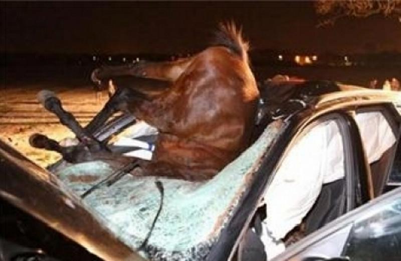 Седем души са пострадали, след като микробусът, в който пътували,