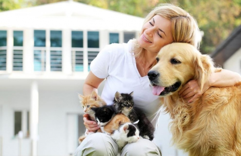 Американски учени доказаха, че галенето на куче или котка е