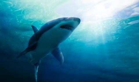 Млад мъж загина след нападение от акула в североизточния американски
