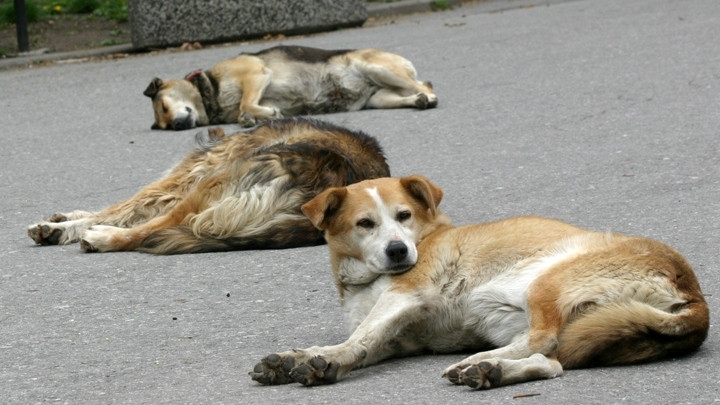 В Бургас в момента се провежда осиновителната кампания за бездомни