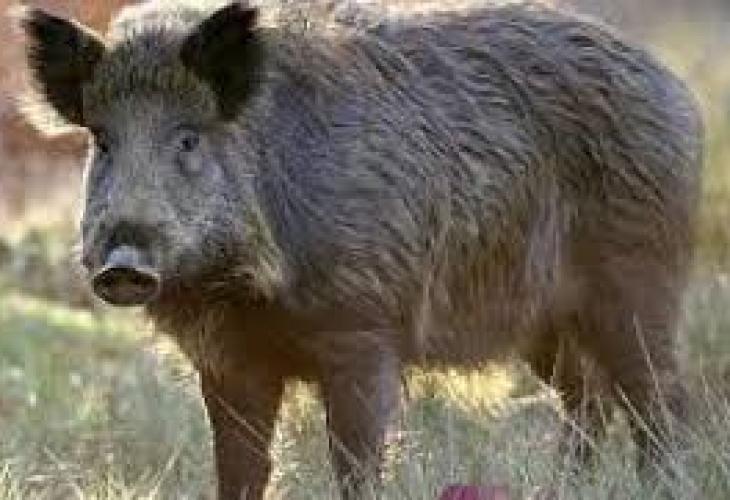От събота, 6 октомври, падат ограниченията за лов на диви