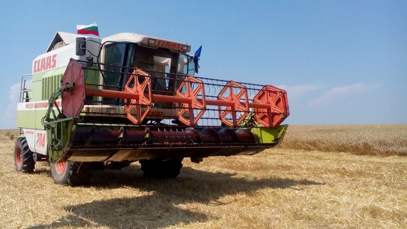 Прибирането на зърното в община Мездра започна въпреки дъждовете, съобщават