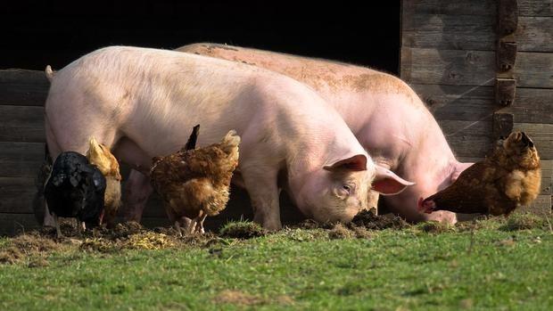 До края на годината животновъдите ще получат всички плащания, обеща