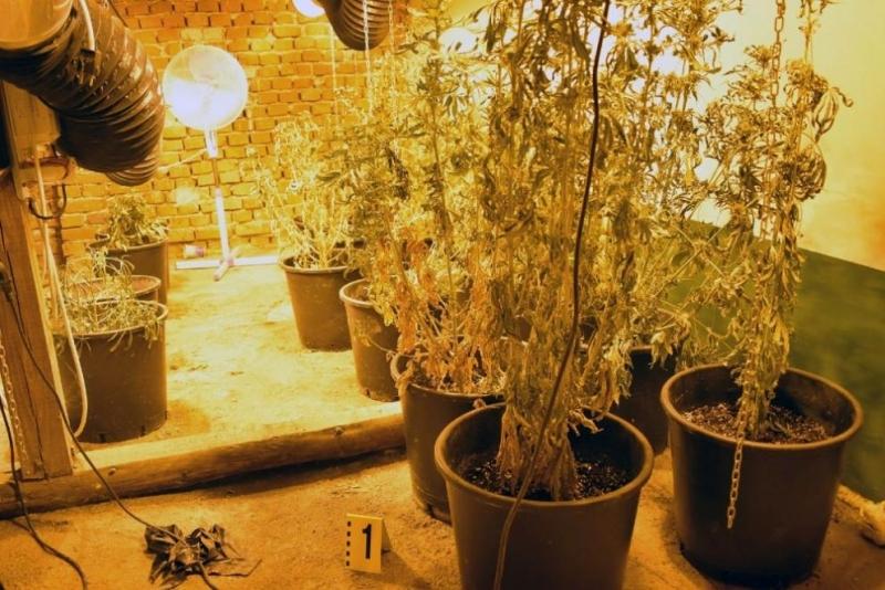 Домашна наркооранжерия и двама притежатели на дрога са били установени