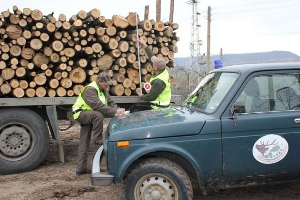Ексклузивно в BulNews! Заловиха горски инспектор от Берковица с бракониерски дърва, предаден е на прокуратурата /снимка/