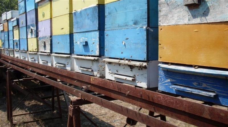 """Пчелари от видинското дружество """"Димитър Балев"""" ще участват в националния"""